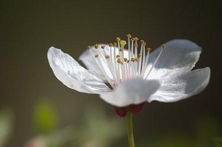 flower-2526103__340