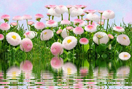 flowers-2693926__340